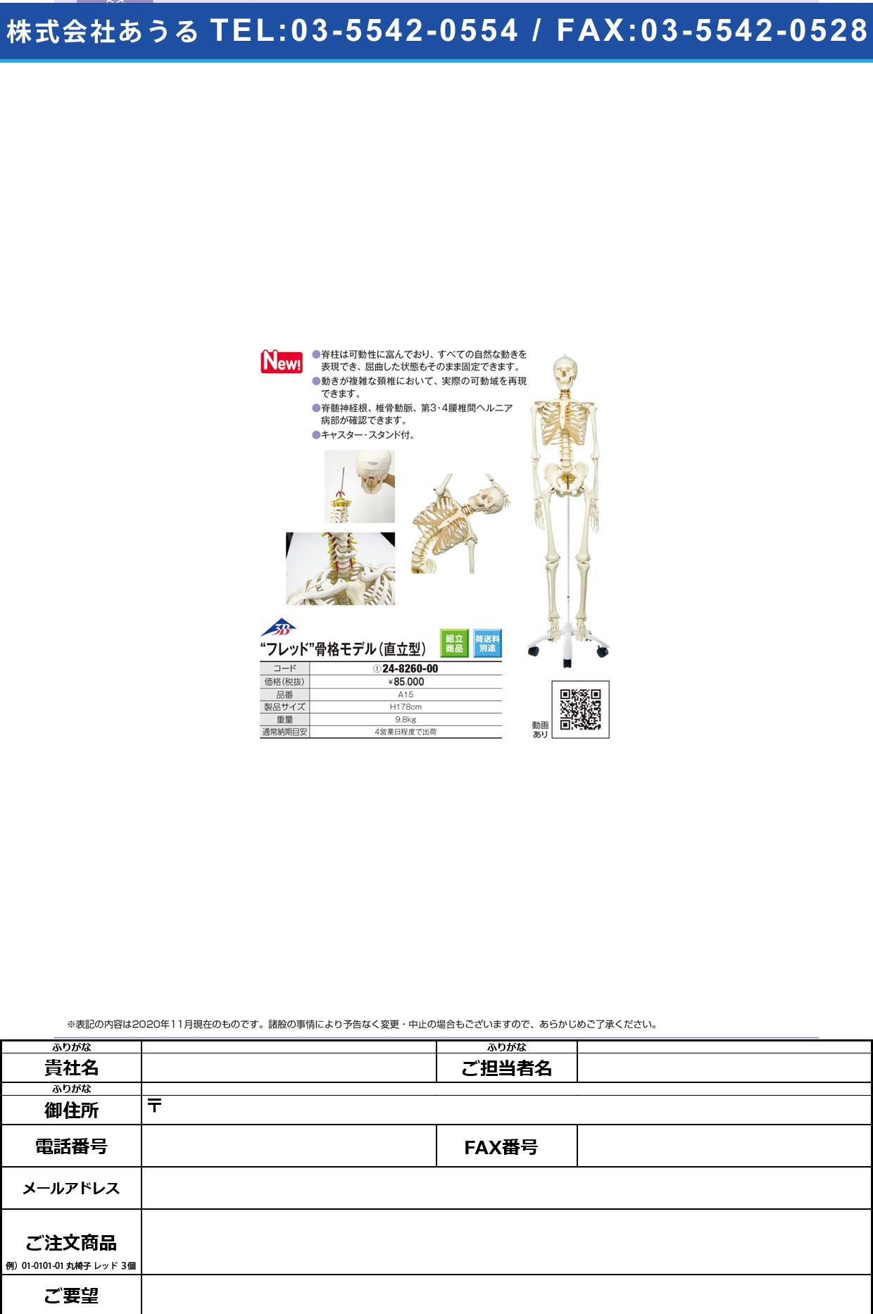 骨格交連模型(脊柱可動型) A15A15(24-8260-00)【日本3Bサイエンティフィック】(販売単位:1)